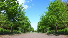 Summer Park Alley with Trees and Flowing Clouds on a Blue Sky Behind Stock Footage