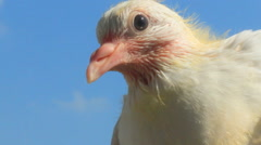 Young sea bird and sky Stock Footage