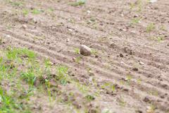 Cultivated field with rocks - stock photo