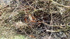 Burning tree branch Stock Footage