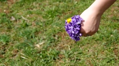 Posy of flowers Viola odorata Stock Footage
