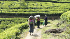 Women working at a tea plantation bringing their harvest to be weighted. Stock Footage