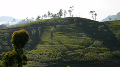 Tea plantation, around Adams Peak, Sri Lanka, Asia Stock Footage