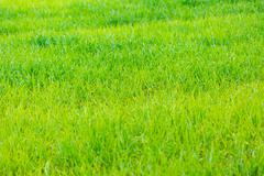 Background of lush green fields Stock Photos