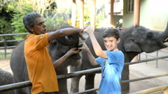 Elephants from the Pinnawela Elephant Orphanage, Sri Lanka Stock Footage