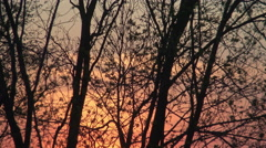 Silhouette of trees with fiery colored sunset Stock Footage