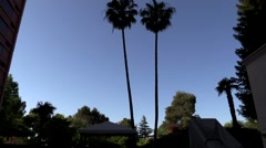 Tall palm trees by pool in northern California. Pan down. Stock Footage