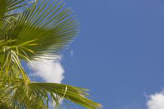 Majestic Tropical Palm Trees Against Beautiful Blue Sky and Clouds. - stock photo