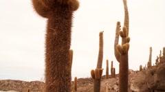 Isla del Pescado, Bolivia, Salt flat Salar de Uyuni Stock Footage