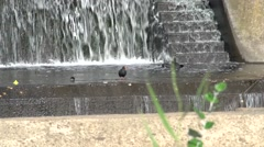 Birds on River Torrens Dam in Adelaide South Australia Stock Footage