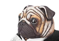 Toy pug dog in butler costume - stock photo