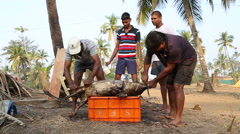 Men scrubbing skin of dead animal at beach in Goa. - stock footage