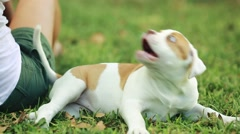 Woman playing with Cute Puppy in Green Grass Stock Footage