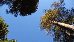 Driving Under Trees Stock Footage