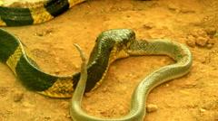 Snake eat snake Arkistovideo