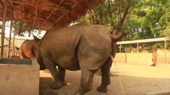 Rhinos in the zoo peeing Stock Footage