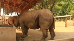 Rhinos in the zoo - stock footage