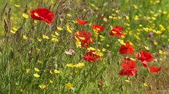 Wildflowers in a Strong Breeze Stock Footage