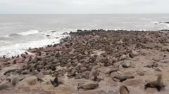 Huge colony of Brown fur seal - sea lions in Namibia Stock Footage