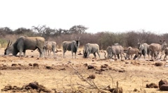 Waterhole in Etosha with many animals - stock footage