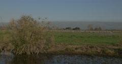 Hula valley cranes hermon pan 4K 24P Stock Footage