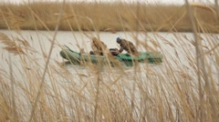 Fishermen, poachers in the reeds.mp4 Stock Footage