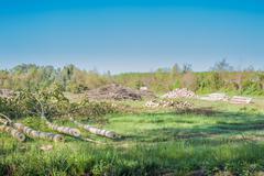 Poplars felled - stock photo