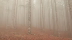 CRIMEA. APRIL 2011: Fog in the forest Stock Footage