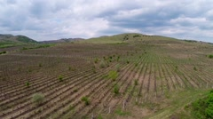 Beautiful vineyard landscape with dramatic sky, aerial view Stock Footage