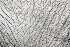 Elephant skin nature pattern background  from closeup view with details - stock photo