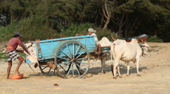 Indian men filling carriage with sand. Stock Footage