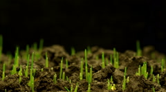 Growth of Fresh New Green Grass - stock footage