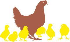 Hen and chicks Stock Illustration