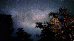 4K Ancient Forest Milkyway 01 Timelapse Dolly Bristlecone Pine Stock Footage