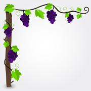 Grapevine frame - stock illustration