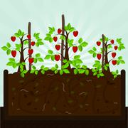 Strawberry tree and compost Stock Illustration