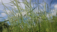 Stock Video Footage of Grass field in the wind