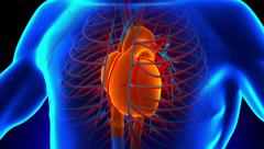 Anatomy Heart new Stock Footage