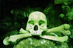 Poisonous Skull Stock Photos