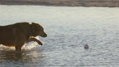 Dog Playing with a ball on the water and shakes in slow motion Stock Footage