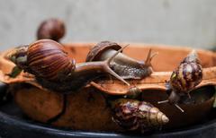 Stock Photo of Gastropod..