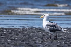 Stock Photo of Seagull on Beach