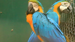 Macaw in park Stock Footage