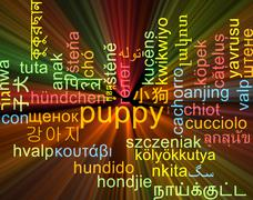 Puppy multilanguage wordcloud background concept glowing Stock Illustration