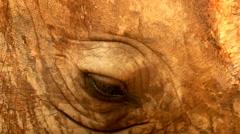 Rhinos eyes Stock Footage