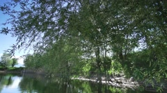 The sun penetrates the branches of willow hanging over lake Stock Footage