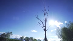 Movement around a dry tree with blue sky background Stock Footage