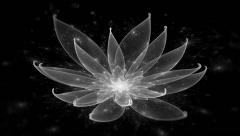 White Lotus Water Lily, Enlightenment or Meditation and Universe, Magic scene - stock footage