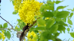 Squirrel is eating the flowers Stock Footage