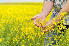Farmer Standing in Oilseed Rapeseed Cultivated Agricultural Field - stock photo